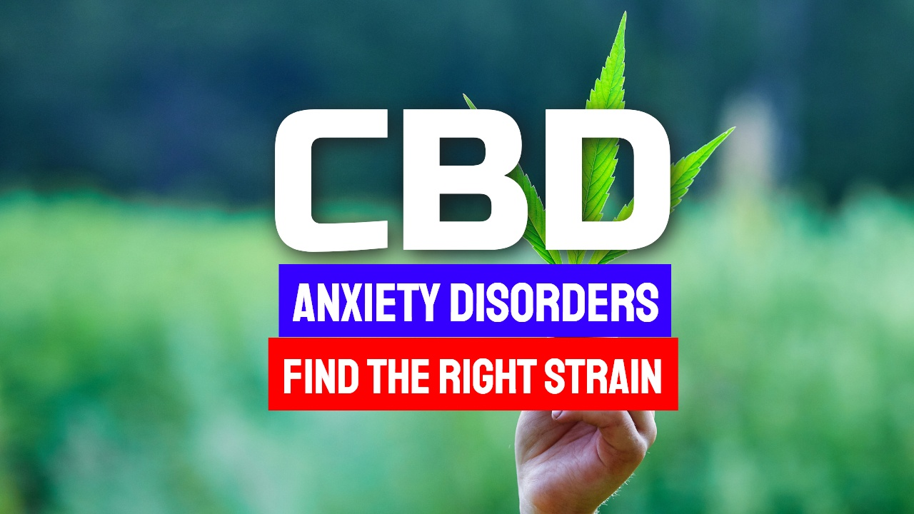 CBD Anxiety Disorders